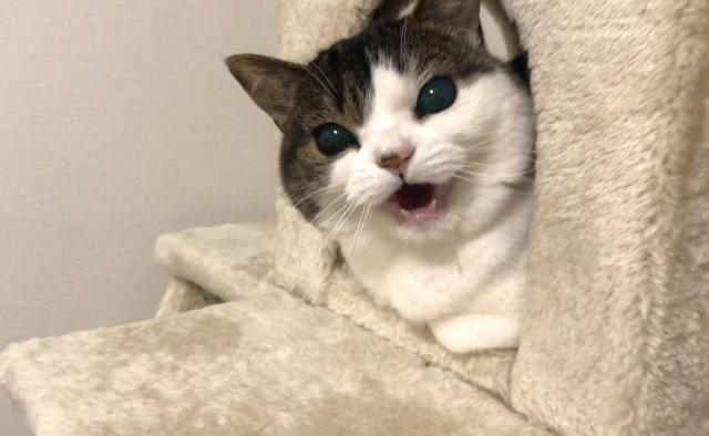 怒り心頭で威嚇する猫さま